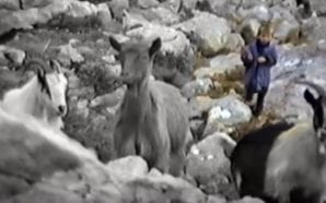RARE FOOTAGE 5-year-old Luka Modrić as a shepherd on Velebit…