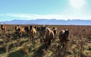 REWILDING VELEBIT Inspiring project to make Velebit considerably more wild