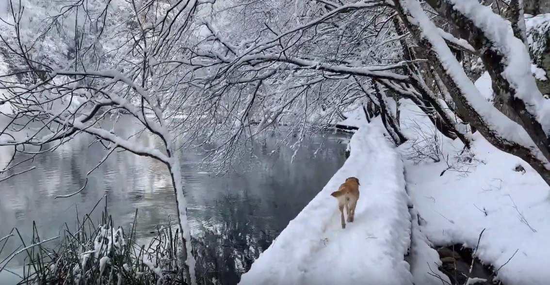 dog plitvice lakes